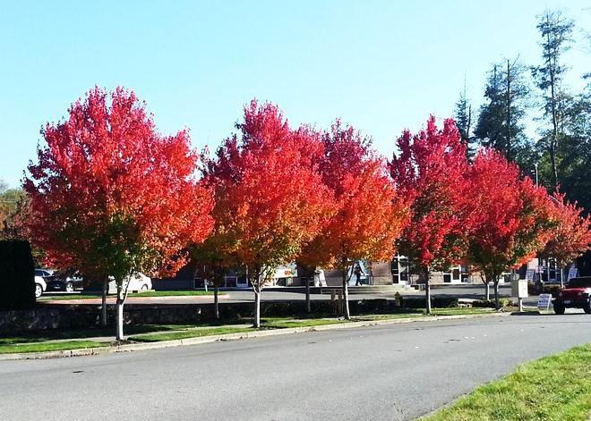 Fall in Mukilteo