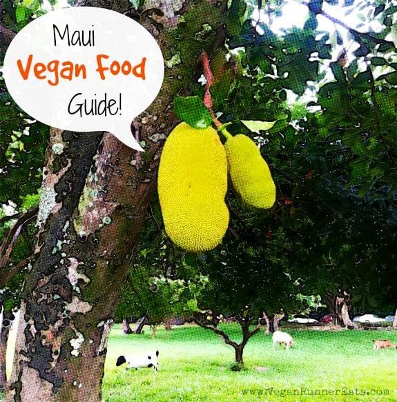Durian-tree-at-Leilani-Farm-Sanctuary-in-Maui-Hawaii