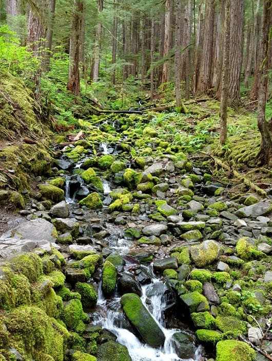 Hiking in the Olympic National Park near SolDuc river