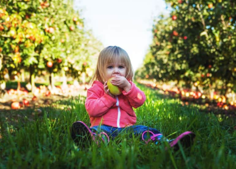 How to get toddlers to eat veggies: tips for busy parents